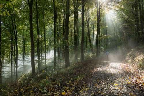 Forest Autumn Fog Nature Trees Landscape Path