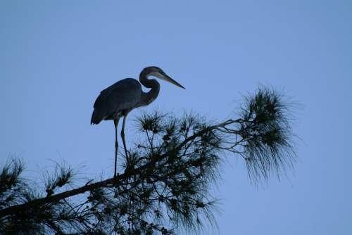 Heron Tree Silhouette Blue Bank Water Bird