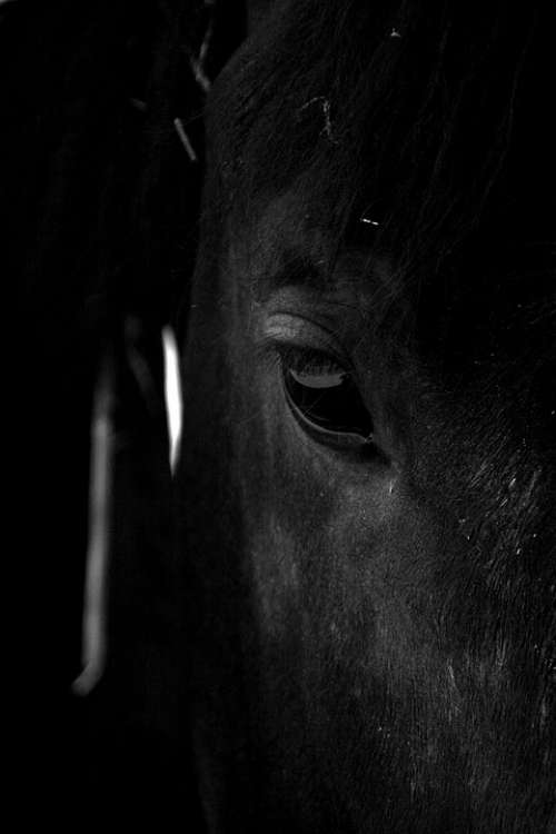Horse Stallion Animal Nature Ride Mane Rural