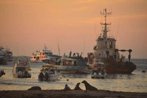 Landscape Sunset Sea Lions Boats