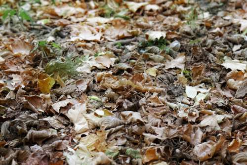 Leaves Dry Down Ground Earth Plants Autumn