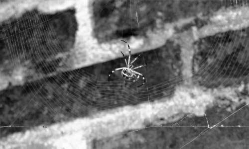 Macro Insect Spider Sting Colombia