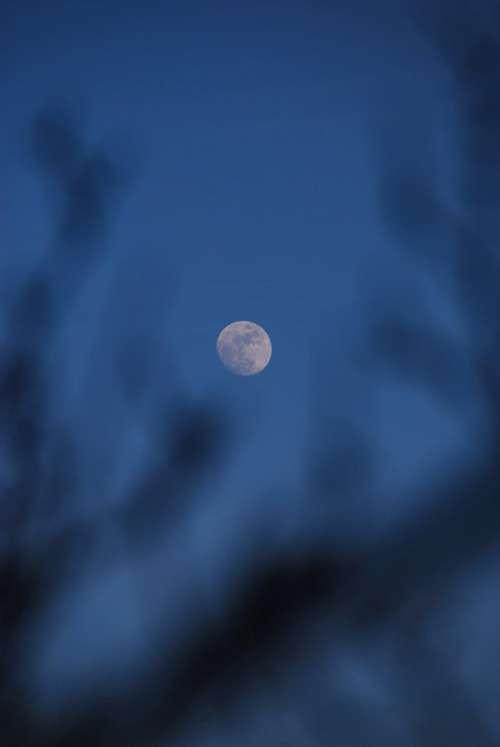 Moon Sky Blue Tree Night Space Dark Atmosphere