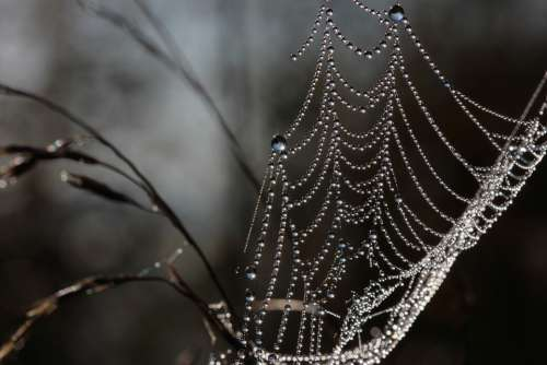 Morgentau Cobweb Dew Dewdrop Nature Web Drip
