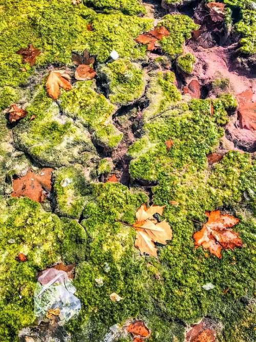 Moss Leaves Nature Green Autumn Sea