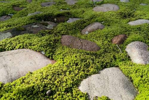 Nature Moss Rock Urban Environment