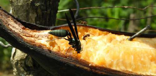 Nature Insect Sting Wasp Colombia