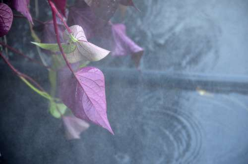Plants Leaves Fog Mist Waterpolo Green Nature