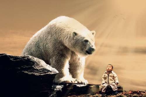 Polar Bear Bear Giant Child Bear Rays Tenderness