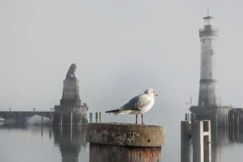 Port Gateway Water Seagull Lake Constance Lindau