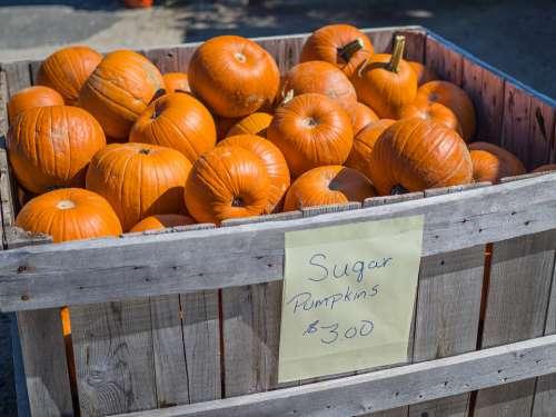 Pumpkin Crate Harvest Autumn Orange Food Fall