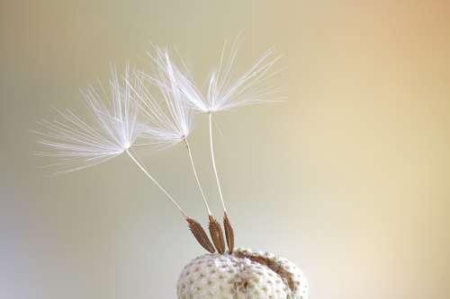 Seeds Macro Dandelion Close Up Color Spring