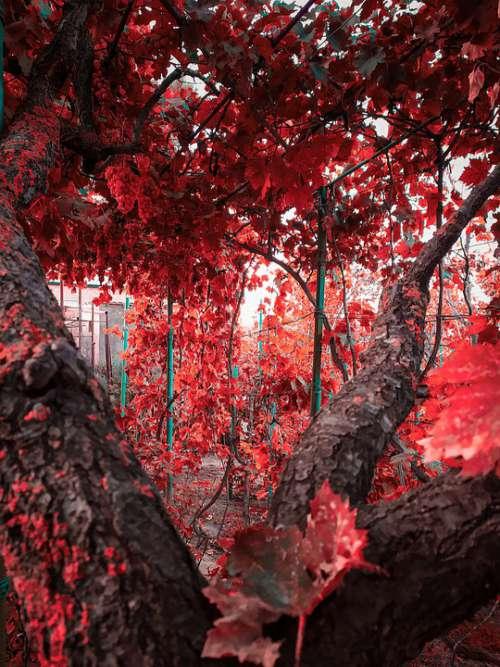 Sheet Garden Dacha Vacation Fantasy Red Tree