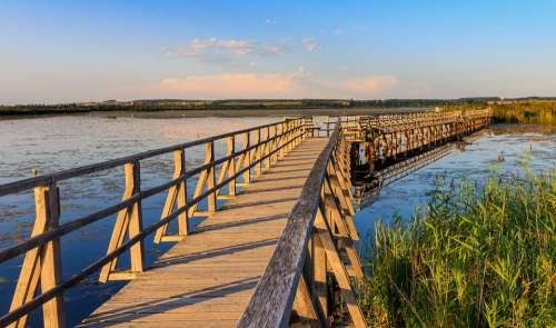 Spring Lake Federsee Pier Nature Nature Conservation