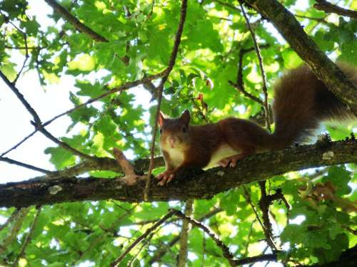 Squirrel Animal Rodents Nature Mammals Cute Fur