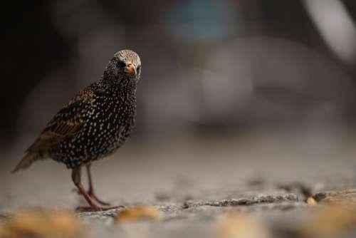 Starling Bird Berlin Streets City Questionable