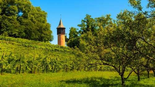 Sweden Tower Mainau Island Tower Vines