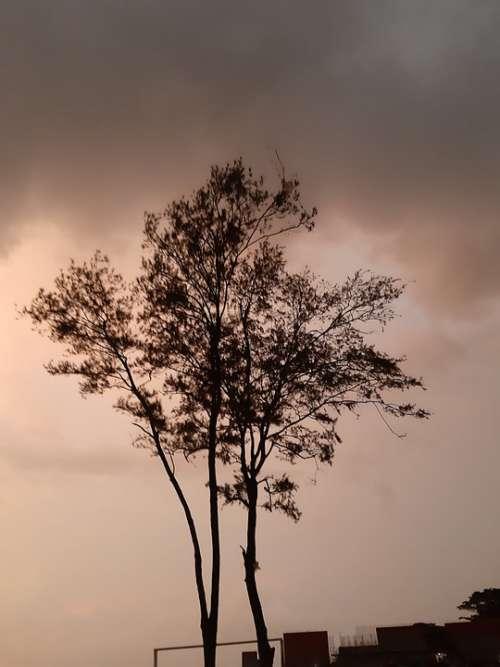 Tree Shadow Night Vibe Twilight Beach Theme