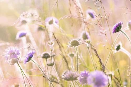 Wildflowers Field Flowers Summer Flora Flower