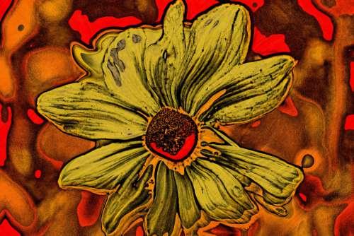 Picasso Sunflower