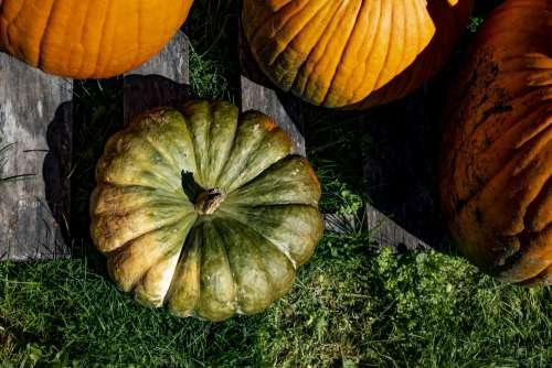Pumpkin Flat Lay Style