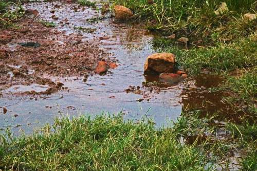 Standing Water With Rocks And Grass