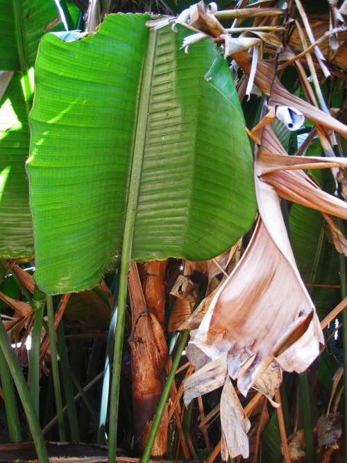 Large Green Tropical Leaf