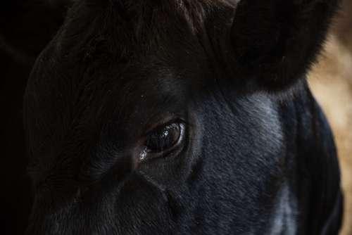 Animal Faces Closeup 7