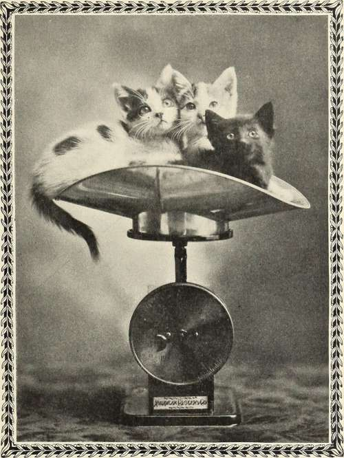 Cats Cats Cats Weighing