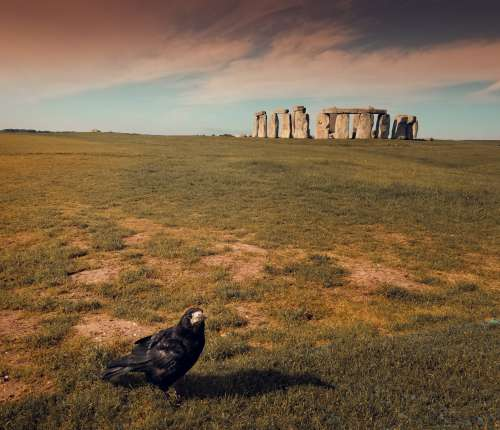 Crow At Stonehenge