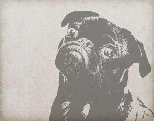 Dog Art Vintage Background
