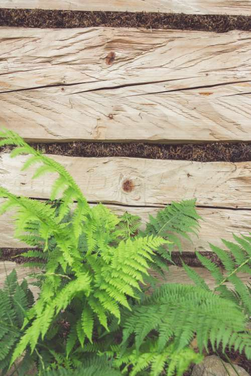 Fern And Wooden Background