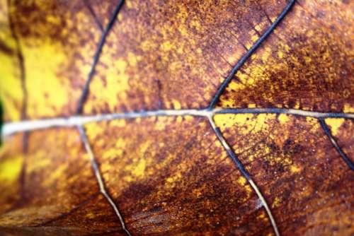 Golden Brown Autumn Fallen Leaf
