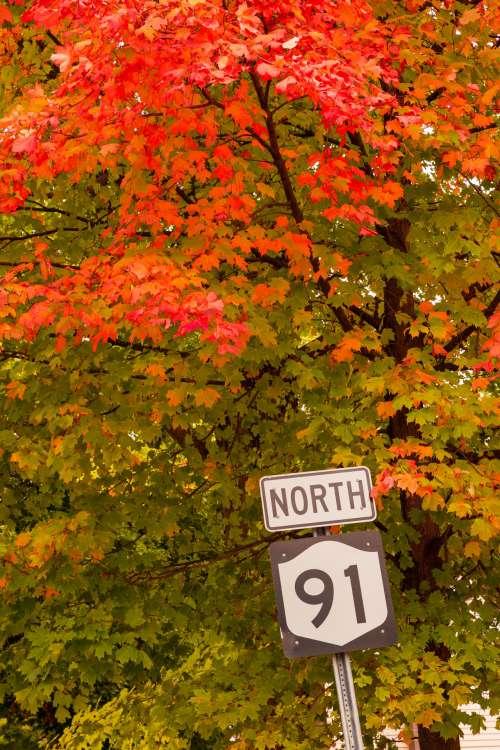 Road Sign In Autumn