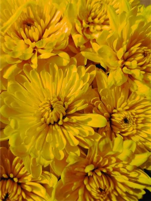 flowers enlargement yellow orange fireworks
