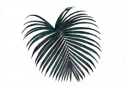 palm leaf black dark tropical