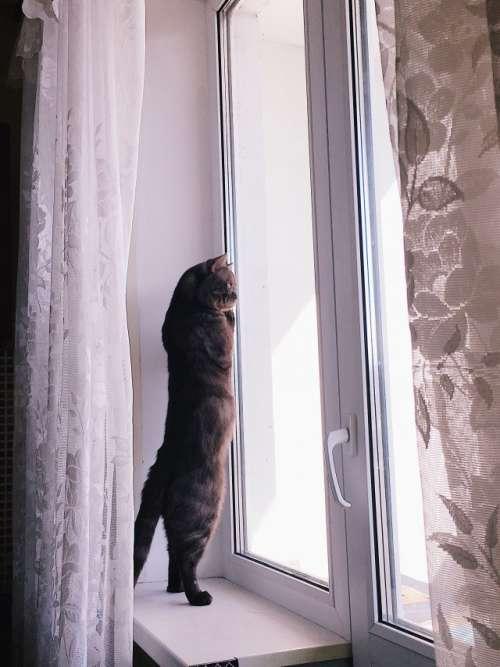 Кот хочет на прогулку