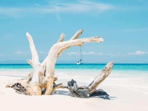 Paradise in Andaman Islands - India with a sailing boat framed within dead woods on a sandy beach