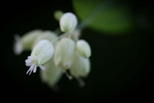 dark flower background white closeup