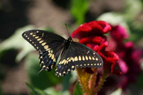 butterfly close up insect garden summer