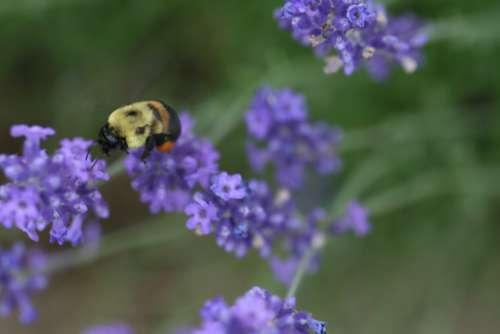 bee flower macro purple petals
