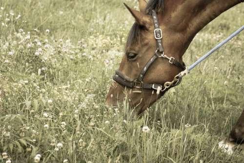 pasture grazing equine field equestrian