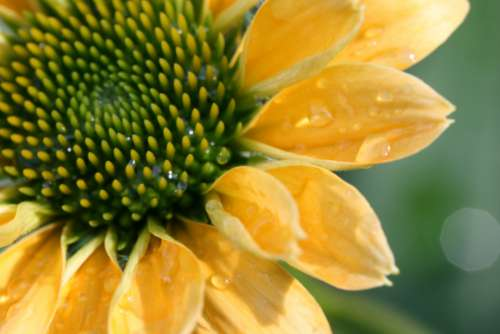 flower petals macro yellow close up