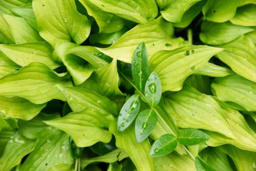 wet leaves plant background green