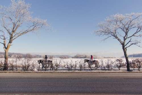 horse ride winter snow cold