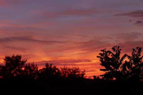 sunset trees sunrise vibrant clouds
