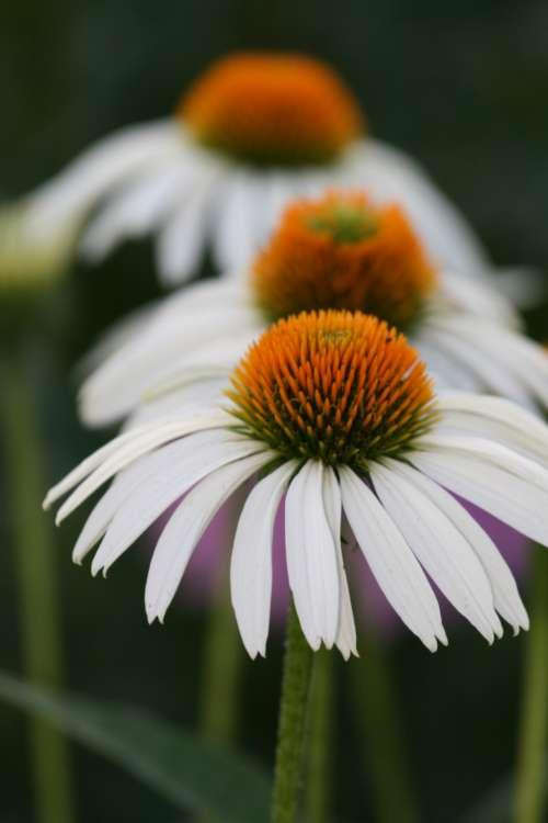 white flower spring organic nature