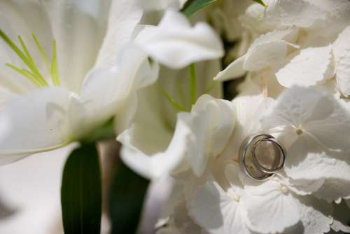 Wedding Rings Placed on Flowers