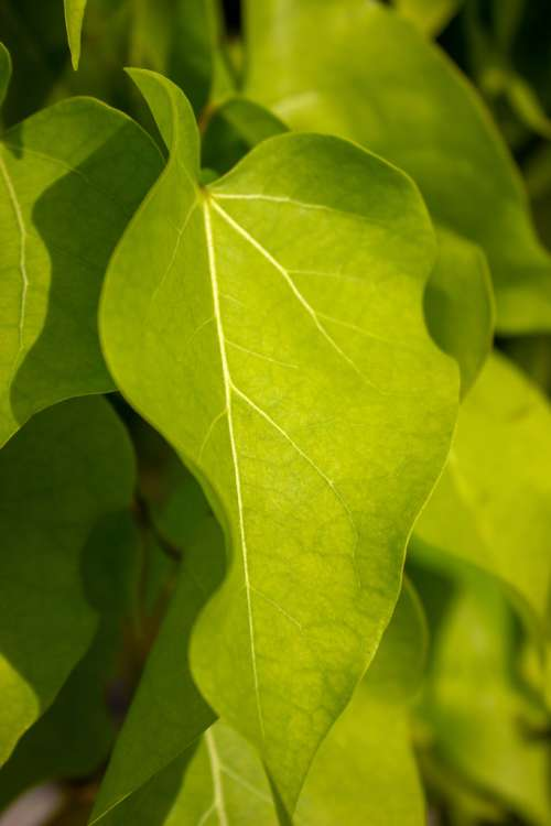 Bright Green Tree Leaf