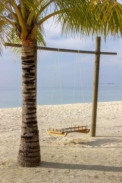 Empty Swing Next to a Palm Tree on a Tropical Beach